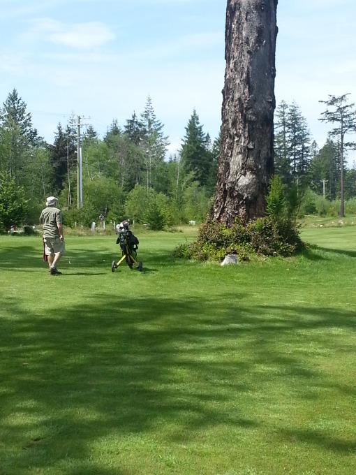 Despite appearances, this tree takes up only a very small part of the eighth fairway. Li'l Stevie hit it with unerring aim!